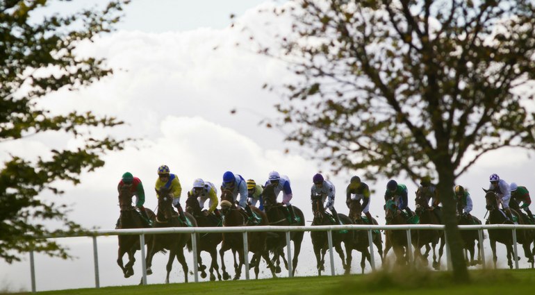 Plan Your Day at Navan Racecourse